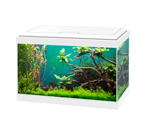 ACQUARIO ASKOLL AQUA 20 LIGHT WHITE BIANCO 17 LITRI LUCE LED ACCESSORIATO